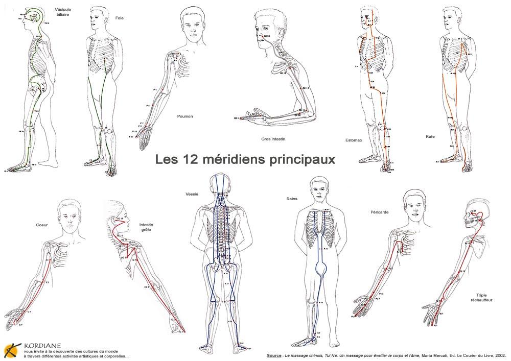 Principaux méridiens du corps humain