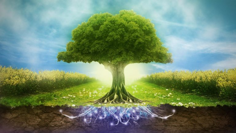Arbre de vie : origines, significations et symboles